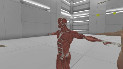 Human muscular system displayed as an educational and interactive diagram in Oculus Rift