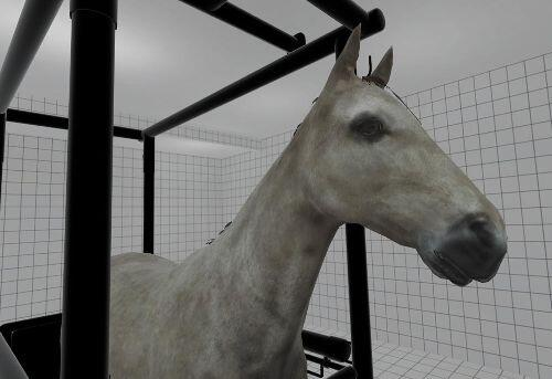 vr training for vet school with horse