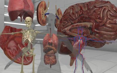 Anatomy Assets
